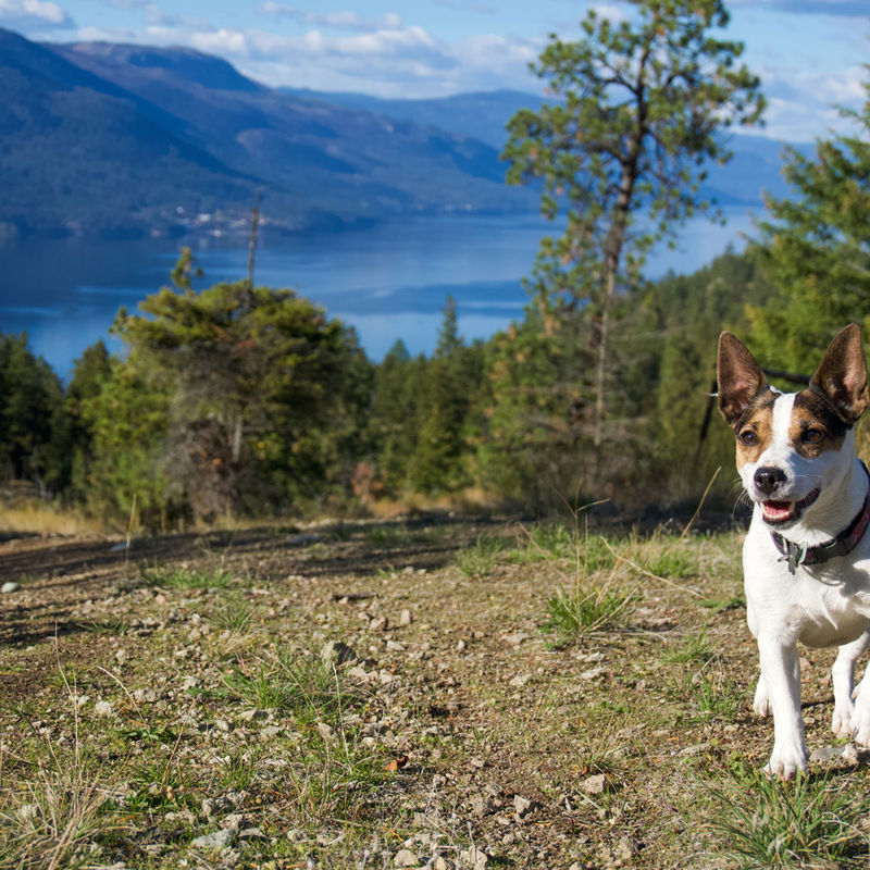5 Ways to Enjoy a Spring Adventure from West Kelowna Pet Friendly Hotels